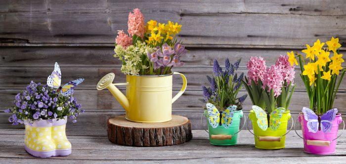 Создайте комнатным растениям благоприятные условия
